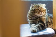 Closed up tabby cat with a tiger pattern relaxing on the floor, Soft focus with copy space. Closed up tabby cat with a tiger pattern lying relaxing on the floor stock images