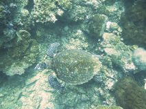 Closed up the turtle in north andaman, Thailand Royalty Free Stock Photography