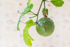 Closed up view of fresh passion fruit. It is good fruit for diet. Closed-up view of fresh passion fruit. It is good fruit for dieting Royalty Free Stock Image