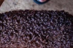 Closed up view of karakul brown lamb wool. Closed up view of karakul brown lamb wool at the daytime stock photo