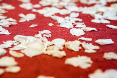 Closed up white flower petals on red carpet floor in church at C. Hristian wedding ceremony. Beginning of life with flower petals concept Stock Photo
