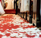 Closed up white flower petals on red carpet floor in church at C. Hristian wedding ceremony. Beginning of life with flower petals concept Royalty Free Stock Photo