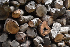 Closed up the woodpile Royalty Free Stock Photo