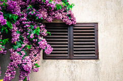 Closed window and flowers Royalty Free Stock Image