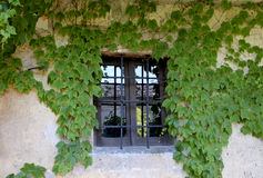 Closed window with ivy Royalty Free Stock Photography