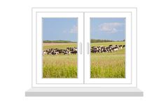 Closed window with a kind on the herd of cows Royalty Free Stock Photos
