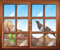 A closed window with a view of the bird at the desert Stock Images