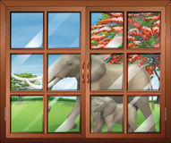 A closed window with a view of the two elephants outside Royalty Free Stock Photo