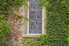 Closed window on a wall full of green leaves plants Stock Image