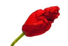 Closed wrinkly poppy bud Royalty Free Stock Photography
