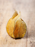 Closed yellow cape gooseberries Royalty Free Stock Photos