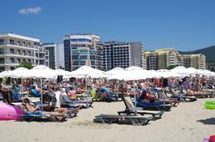 Closely positioned beach umbrellas and beach lounge chairs Royalty Free Stock Photos