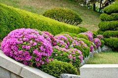 closen blommar rosa övre Arkivfoton