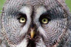 closen eyes upp owlen Royaltyfri Fotografi