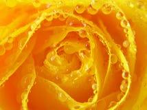closen tappar rose övre yellow Arkivbild