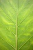 closen tappar upp grön leave Royaltyfri Bild