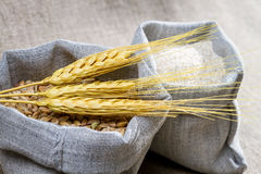 Closep canvas sack of wheat Royalty Free Stock Images