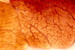 Closeup of muscle tissue, XXL Stock Image