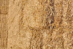 Closep on straw Stock Photography
