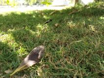 Closer click of brown green grass. A beautiful closer click of brown green grass, a dried leaf is laying on it royalty free stock image