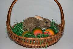 Closer view on a little porcelain easter bunny and colorful easter eggs on a green grass in a basket with copy space. And photographed indoors in germany during royalty free stock photography