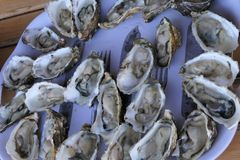 Oyster party royalty free stock photography