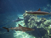 Closesharks stock photography