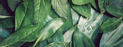 Closeu macro da disposição do fundo orgânico do verde da textura da folha das folhas imagens de stock