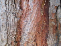 Close up tree texture. In sunlight stock image