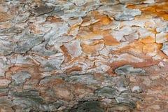 Closeuo av sörjer trädskället, abstrakt texturerad bakgrund Royaltyfria Bilder