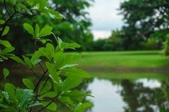 closeup капелька воды на зеленых лист дерева в лесе с gras Стоковое Фото