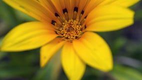 closeup royaltyfria foton