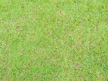 Closeup of abstract green grass floor background.  Royalty Free Stock Image