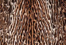 Closeup abstract leopard fur illustration. Closeup of abstract leopard fur background texture illustration artwork texture pattern Stock Photography