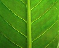 Closeup abstraction Stock Photos