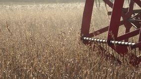 Closeup of agricultural combine machine with reel and cutter bar threshing oats. Panorama. 4K stock video footage