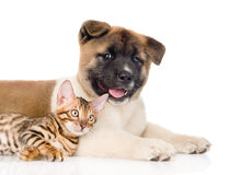 Closeup Akita inu puppy dog with small bengal cat lying together. isolated on white.  Royalty Free Stock Images