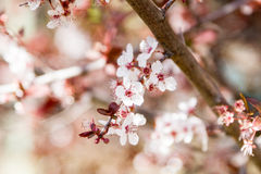 A closeup of an almond tree Stock Images