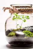 Closeup of amazing jar with live forest Stock Photography