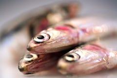 Closeup of anchovvies Royalty Free Stock Photo