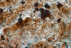 Closeup of  ancient  limestone  texture Stock Photography
