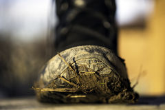 Closeup of andvenurers tough outdoor boot covered with mud, gras. S and sticks on the bottom, outdoor activity concept Royalty Free Stock Photos