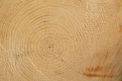 Closeup annual growth rings Stock Images