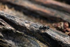 Closeup of an ant Royalty Free Stock Images