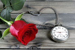 Closeup of an antique pocket watch and a red rose on an antique Stock Images