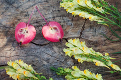 Closeup of antirrhinum and halves of paradise apple Royalty Free Stock Images
