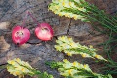 Closeup of antirrhinum and halves of paradise apple Stock Images