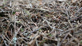 Closeup of an ants nest stock footage