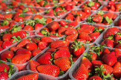 Closeup of appetizing red strawberries Stock Images