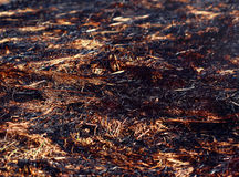 Closeup arson and burned dry grass Royalty Free Stock Image